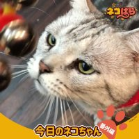 🐈━━━━━━━━━🐈  今日のネコちゃん     番外編🐈━━━━━━━━━🐈📱配信情報はこちら📱🐾dアニメストア🐾d